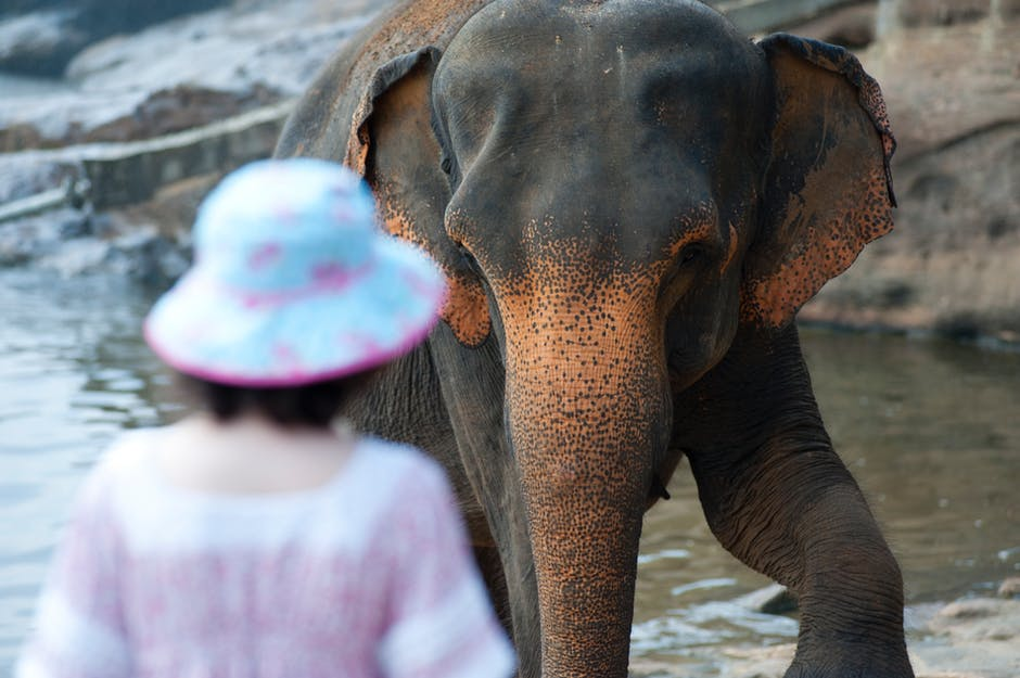 elephant-in-thailand