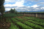 the school student's vegetable farm.